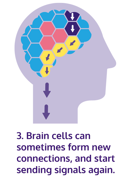 Illustration of neuroplasticity process with new cells forming new connections in the brain.