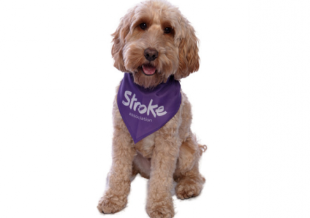 Gift ideas stroke association dog bandana negle Images